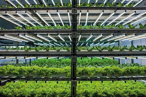 indias hydroponic farmers  building businesses