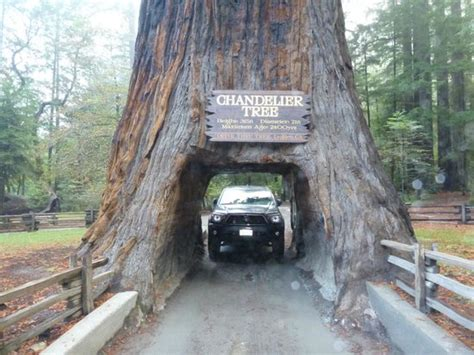 Cabins In Humboldt Redwoods State Park by Chandelier Tree Leggett Ca Picture Of Humboldt
