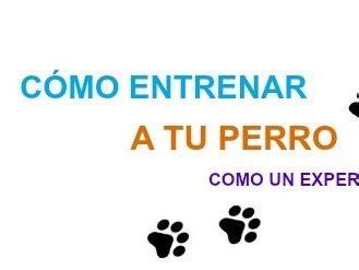 libro cmo entrenar a tus libros de como entrenar a tu perro gratis mascotas