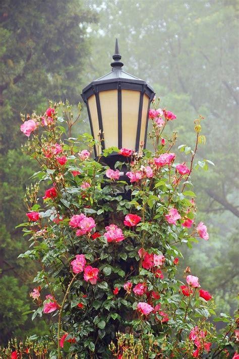 el enrejado in english las 25 mejores ideas sobre rosas trepadoras en pinterest y
