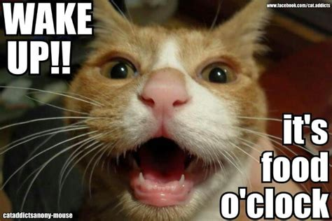 Cat Food Meme - food o clock memes meme cat cats lolcat lolcats