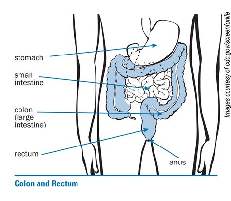 Stool In Rectum by Colon Screening