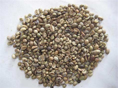 Xo Coffee Robusta c 224 ph 234 robusta v 249 ng nam sumatra của indonesia sẽ giảm 1 1