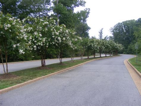 busch gardens williamsburg va address katy perry buzz