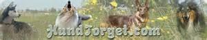 le berger köln v 228 lkommen till hundtorget valpannonser hundv 228 nner