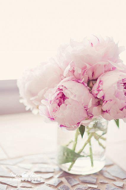 pink peonies 1000 ideas about pink peonies on pinterest peonies