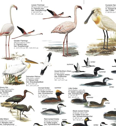 water birds birds of europe s wetlands poster nhbs