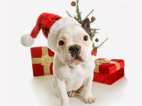 all new wallpaper my christmas gift for dog lovers wallpaper