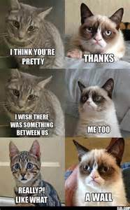 Cat Meme Pictures - grumpy cat meme cats picture
