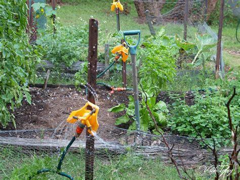 Eucalypt Habitat Watering The Vegetable Garden Water Vegetable Garden