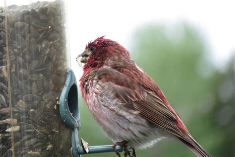 dead bird in backyard meaning 100 dead bird in backyard meaning best 25 bird