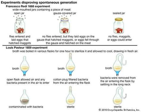 Simple And Spontaneous by Spontaneous Generation Exles Experiments