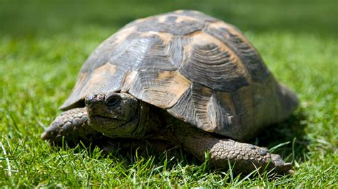 reasons pet turtles and tortoises are awesome