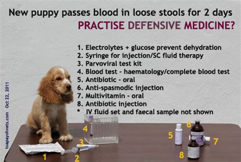 Blood In Dogs Stools by Stool With Blood Breeds Picture