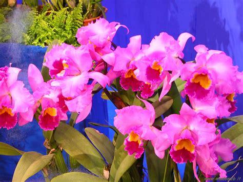 foto fiori fiori panorami
