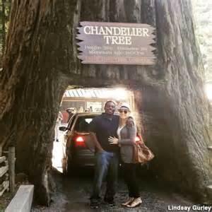 chandelier tree in the drive thru tree park chandelier drive thru tree park leggett ca california