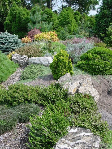 rock garden cground 304 best rock gardens ground covers images on