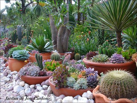 jardim de cactus suculentas by josi cardoso dicas para