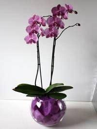 acquisto fiori acquisto piante fiorista