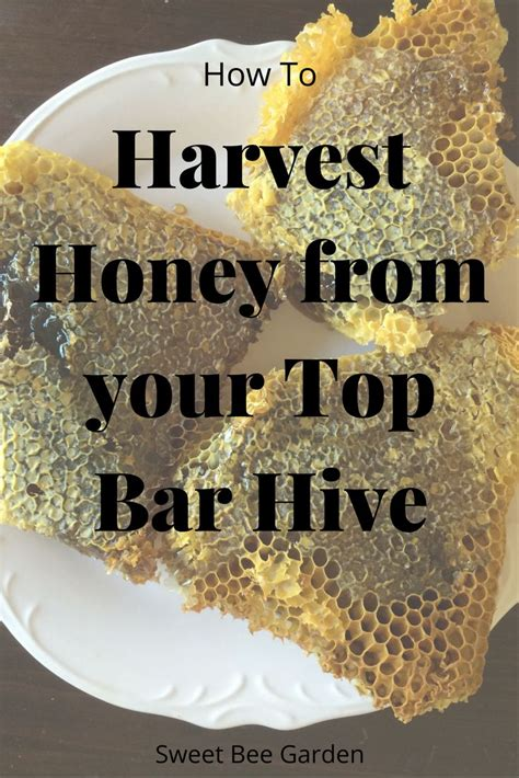 harvesting honey from a top bar hive how to harvest honey from a top bar hive top bar hive