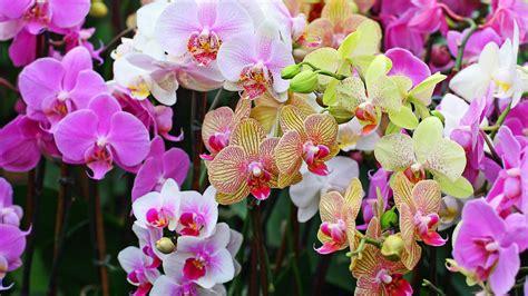 orchids google search flowers pinterest