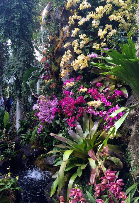the new york botanical garden orchid show quintessence orchidelirium 2016 orchid show at the new york botanical