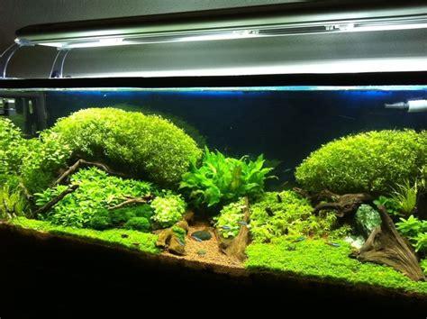 iluminacion de peceras iluminaci 243 n acuario plantado acuario y peces