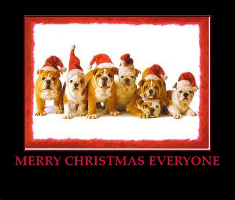 dog funny christmas quotes quotesgram