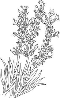Galerry flower coloring sheet