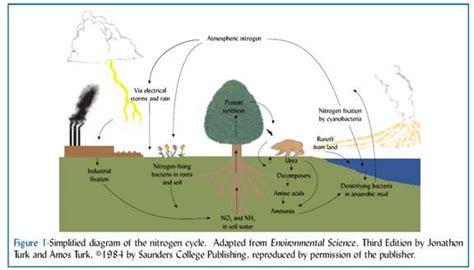 Lab 2 Urban Ecology Nitrogen Cycling In The Urban Ecosystem