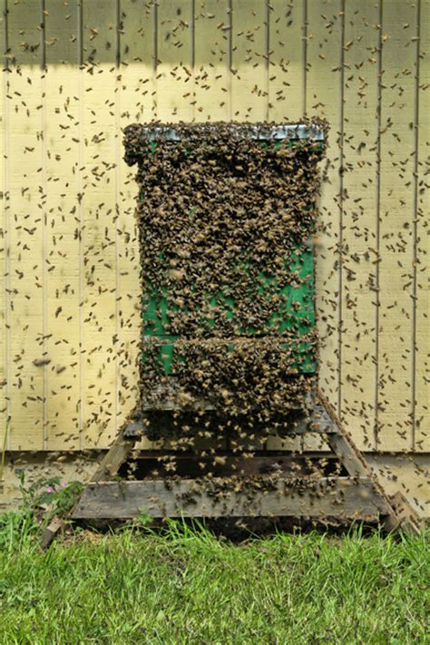 top bar bait hive bait hives archives honey bee suite
