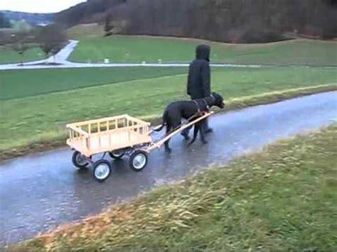 hunde wagen hundewagen
