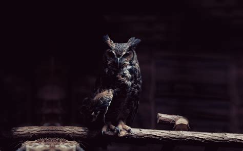 wallpaper black owl hd owl pictures hd desktop wallpapers 4k hd