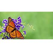 How To Attract Butterflies Your Garden