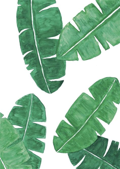 banana palm wallpaper australia the 25 best banana leaves ideas on pinterest banana