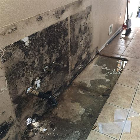 black mold images black mold pictures image gallery mold badger to the rescue