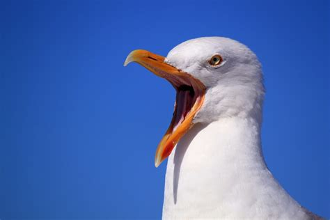the open boat seagull free photo seagull sky holiday bird bill free image
