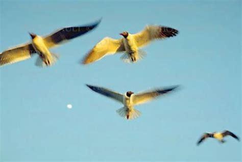 imagenes sensoriales de la novela juan salvador gaviota otros portafoliojavo