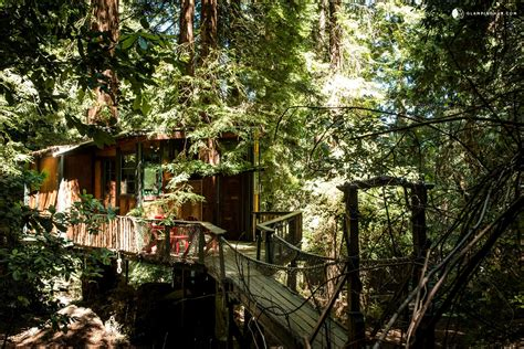 The Place Gling Gling Tree House In Santa Mountains Near Monterey Bay Ca