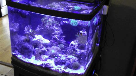 http www current biocube 29 ugrades current usa orbit marine led plus more