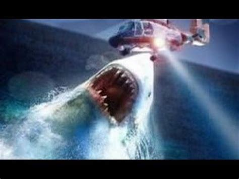 megalodon sharks still lives evidence that megalodon is not extinct real megalodon sightings megalodons biggest sharks