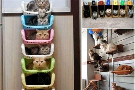 gatti in casa idee per i gatti di casa tutto ze