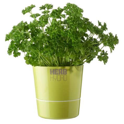 herb pot herb hydro pot lime