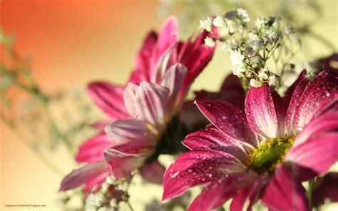 imagenes flores en hd im 225 genes y fondos hd flores de gerbera