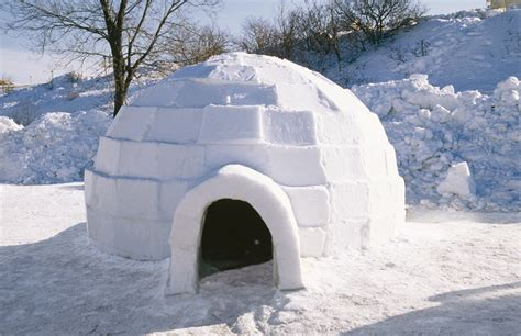 Igloo House | the hormesis bars agingsciences anti aging firewalls