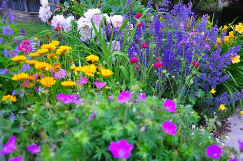 backyard garden florist fayetteville ny backyard garden florist fayetteville ny 100 flowering plants colorado yes you can plant