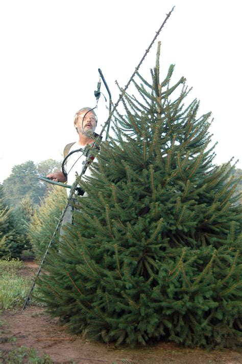 sprucing up wolgast tree farm