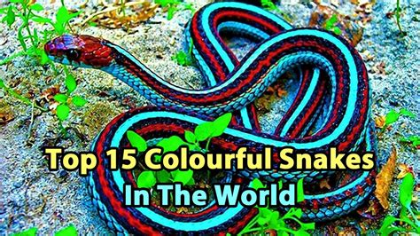 colorful snakes top 15 colourful snakes in the world