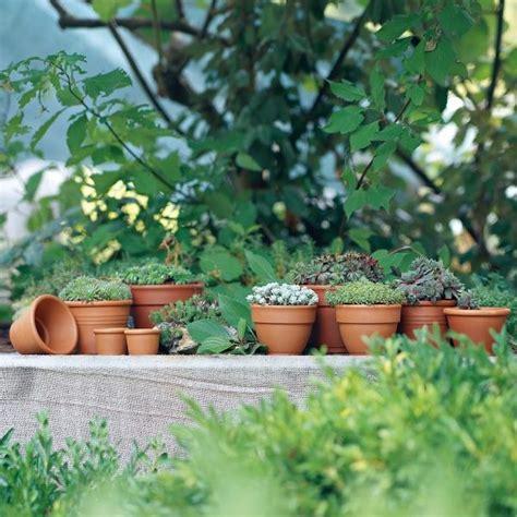 vasi di terracotta da esterno vasi in terracotta da esterno agriverde pasiano pn