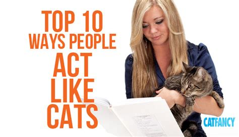 acts like cat top 10 ways act like cats petcha